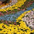 花壇の花花