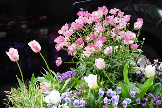 花壇に咲く花