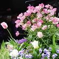 Photos: 花壇に咲く花