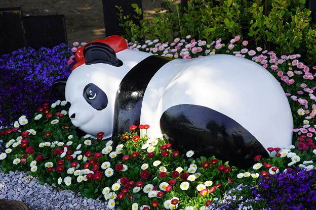 パンダのいる花壇