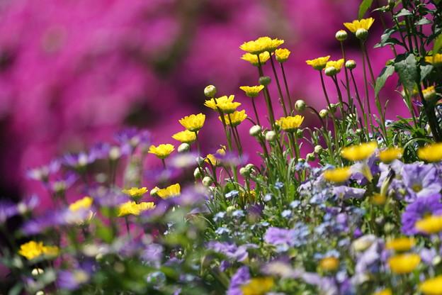 ,花壇の花々