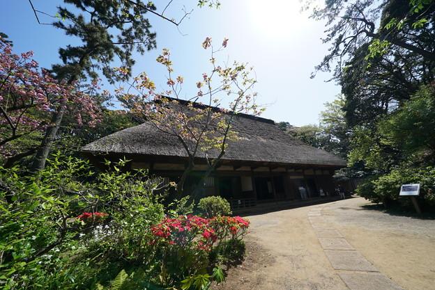 春の合掌造りの家