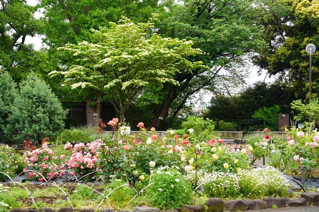 春の三ツ沢公園