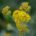 春の花DSC01984