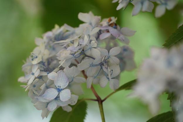 Photos: 鹿野の華