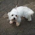 Photos: 近所の犬