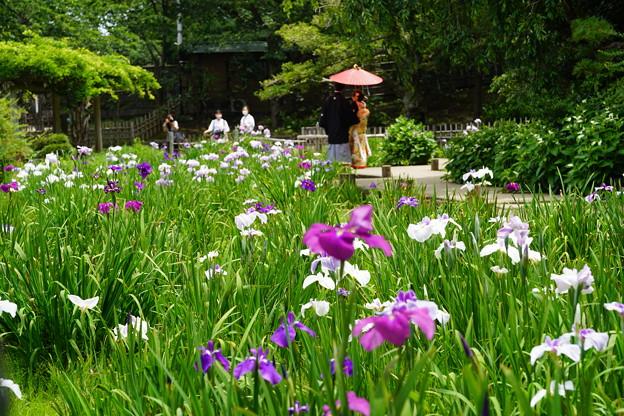 Photos: 花菖蒲園
