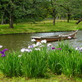 小舟と花菖蒲