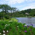 初夏の三渓園