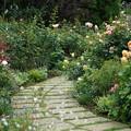 イングリッシュローズの庭