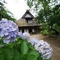 紫陽花と合掌造りの家