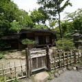 Photos: 春草蘆