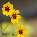 Photos: 花壇の花