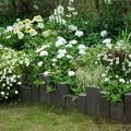 Photos: 初夏の花壇