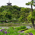 花菖蒲と三重塔