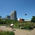 山下公園・未来のバラ園