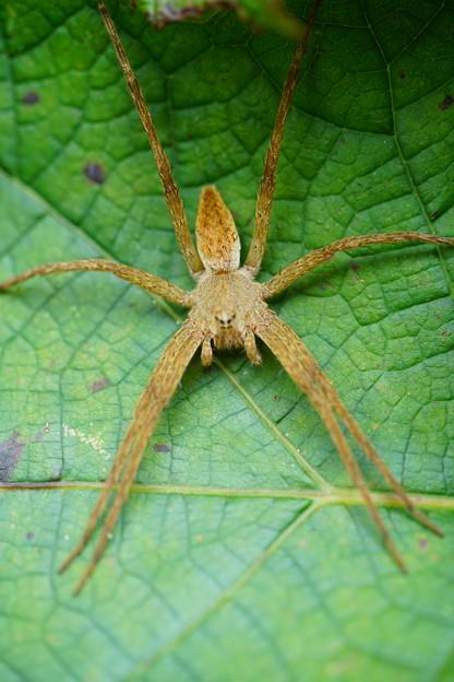 大きな蜘蛛