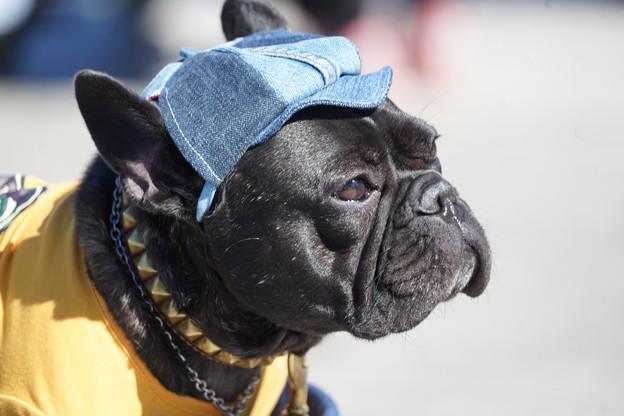 帽子被った犬
