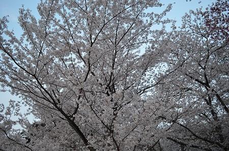 220140408 上賀茂神社