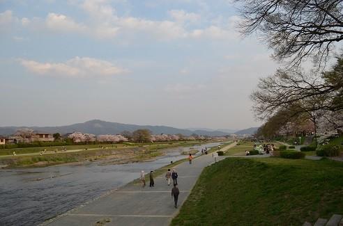 写真: 20140409 鴨川 2