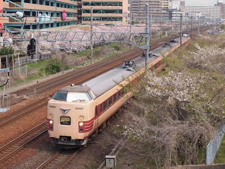 381系回送 桜orz