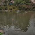 Photos: 八坂神社の池