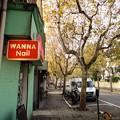 Photos: 街路樹とネイル看板