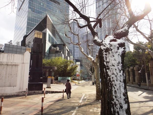 雪と木と太陽と
