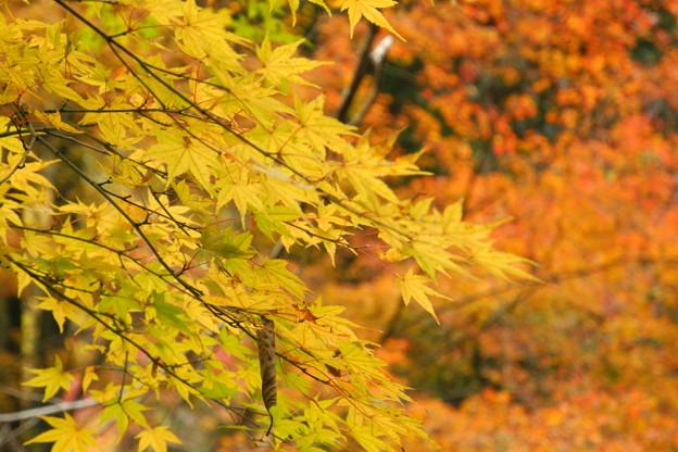 調音の滝公園の紅葉