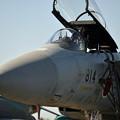 写真: Fighter and