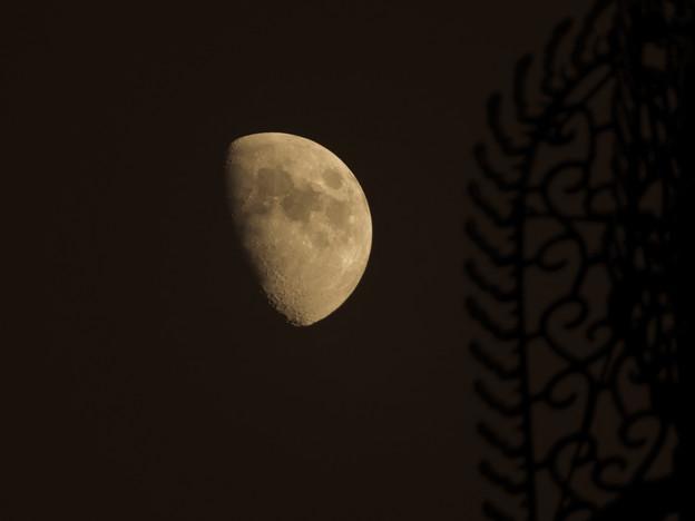 興福寺の夜