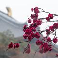 Photos: 雨の東大寺大仏殿