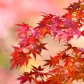 紅葉-暖色背景に