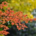 紅葉-御苑-2