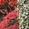 紅葉-御苑-3