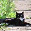 Photos: 白いソックスの黒猫さん