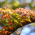 Photos: 紅葉-緑と赤-1