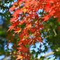 Photos: 紅葉-緑と赤-2
