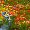 Photos: 紅葉-緑と赤-3