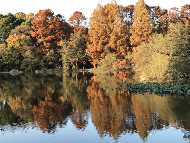 Photos: 紅葉-池の向こう