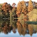 紅葉-池の向こう