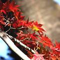 Photos: 紅葉-赤と黄-2