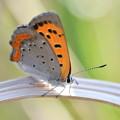 今春 始めての蝶々さん