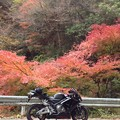 Photos: 2012秋 奥多摩へ紅葉狩りへ