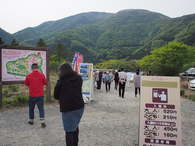 富士山芝桜会場入口付近の様子
