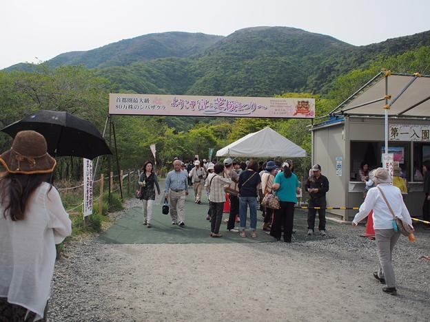 富士芝桜会場入口の様子