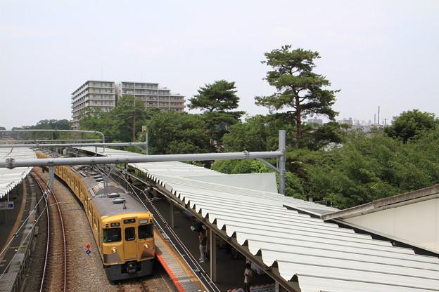 緑の木々と電車