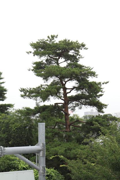 お気に入りの木◆7.9