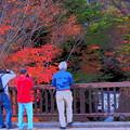 Photos: オジサンたちも紅葉に夢中
