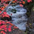 Photos: 紅葉と川の流れ